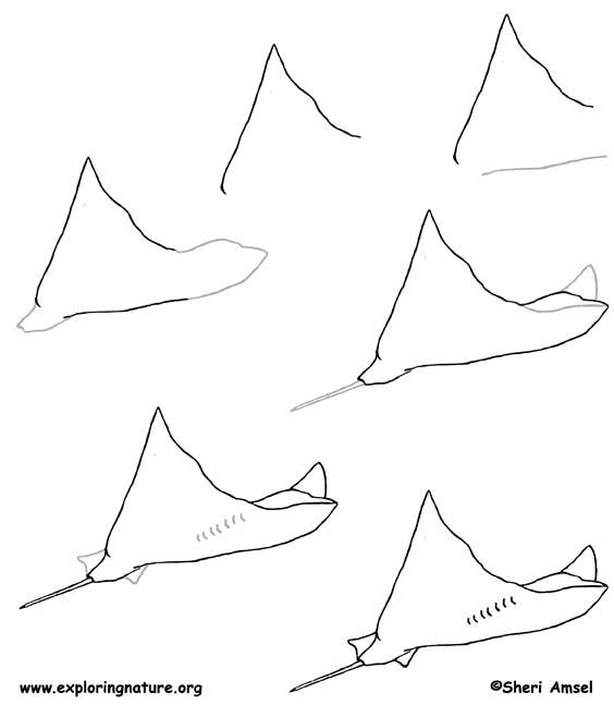 Stingray Drawing Lesson