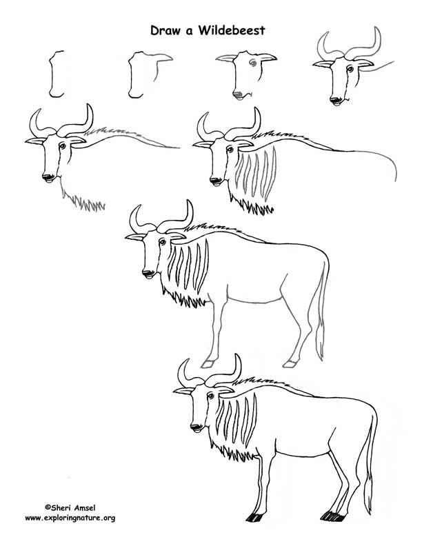 Wildebeest Drawing Lesson