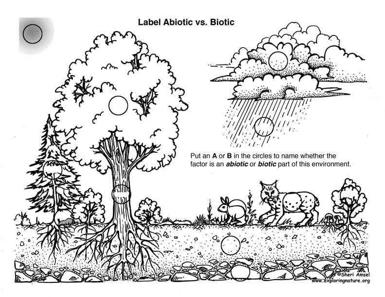 Biotic vs. Abiotic Activity