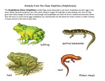 Class Amphibians 4th Grade and up