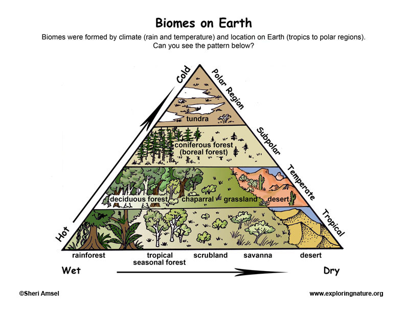 temperate forest food web diagram 07 f150 fuse box biomes - locations on earth
