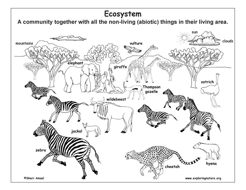 What is Ecology? An Illustrated Introduction to Ecology Terms