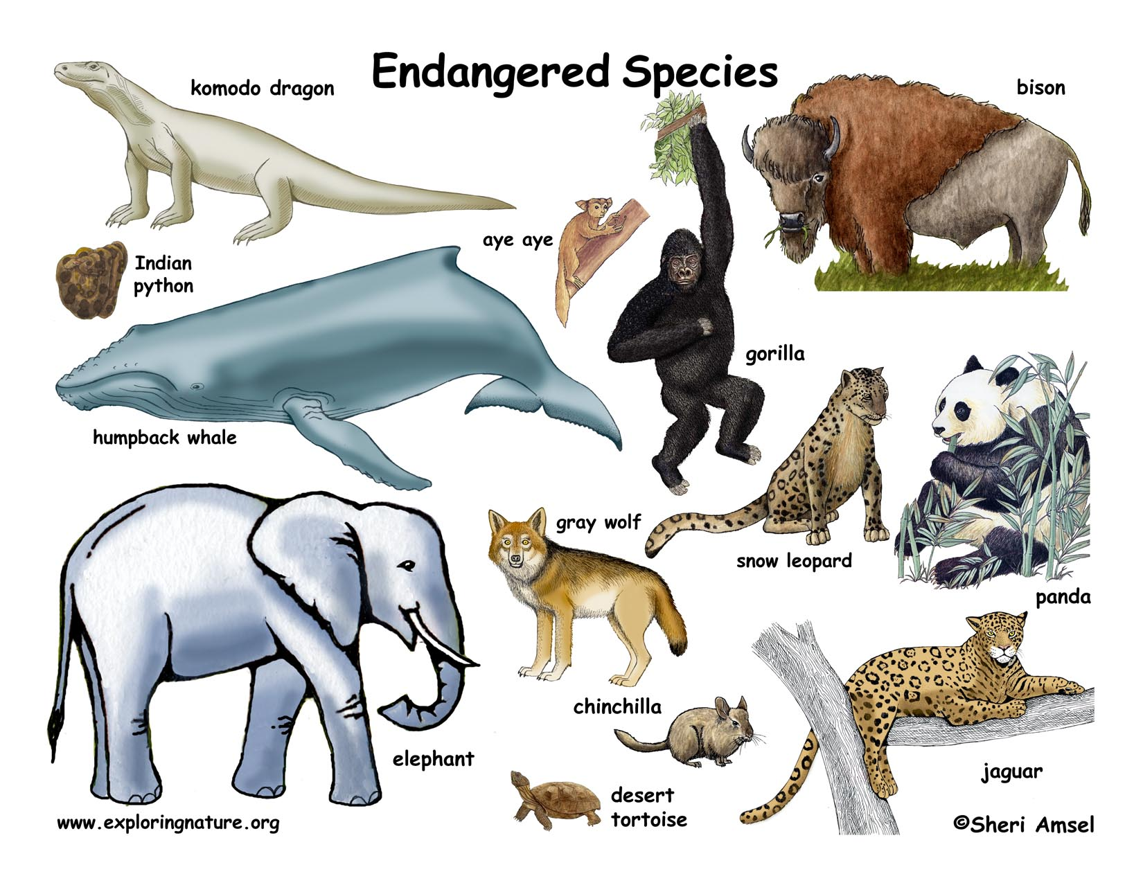Which Animals Are Endangered