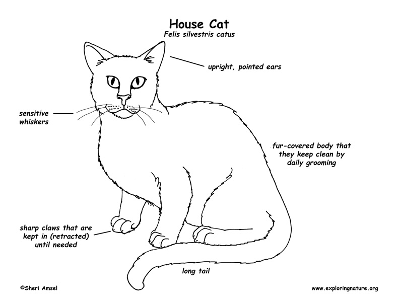 cat meat diagram