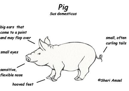 Pin Pigs-diagram on Pinterest