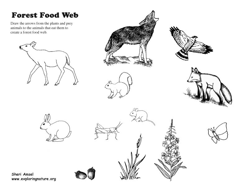 Food Web Activity and Teaching Visual Aid (Models)