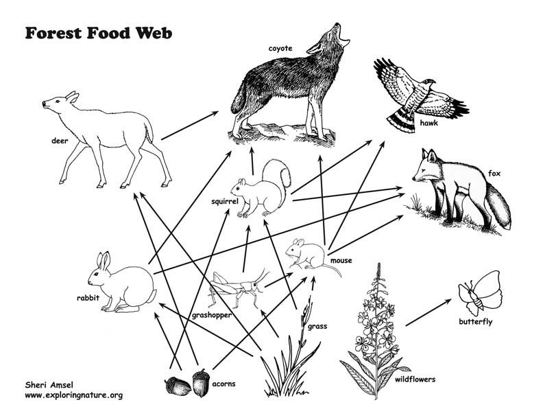 Food Web Activity and Teaching Visual Aid (Models)
