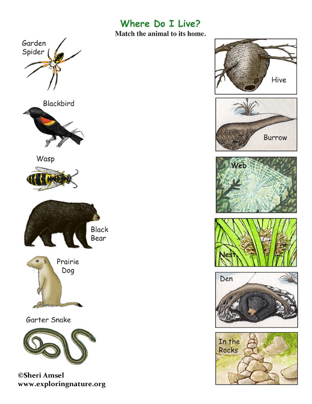 Match The Animals To Their Homes Game