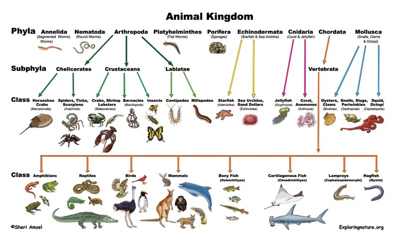 bird life cycle diagram ford ba falcon stereo wiring classification of living things