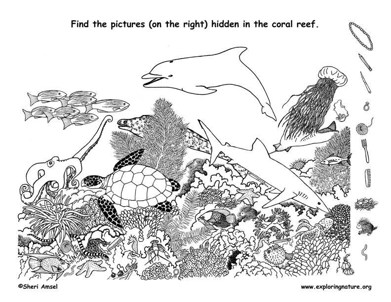 Coral Reef Hidden Picture