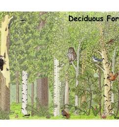 deciduous forest labeling page [ 1650 x 1275 Pixel ]