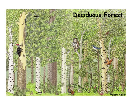 small resolution of deciduous forest labeling page