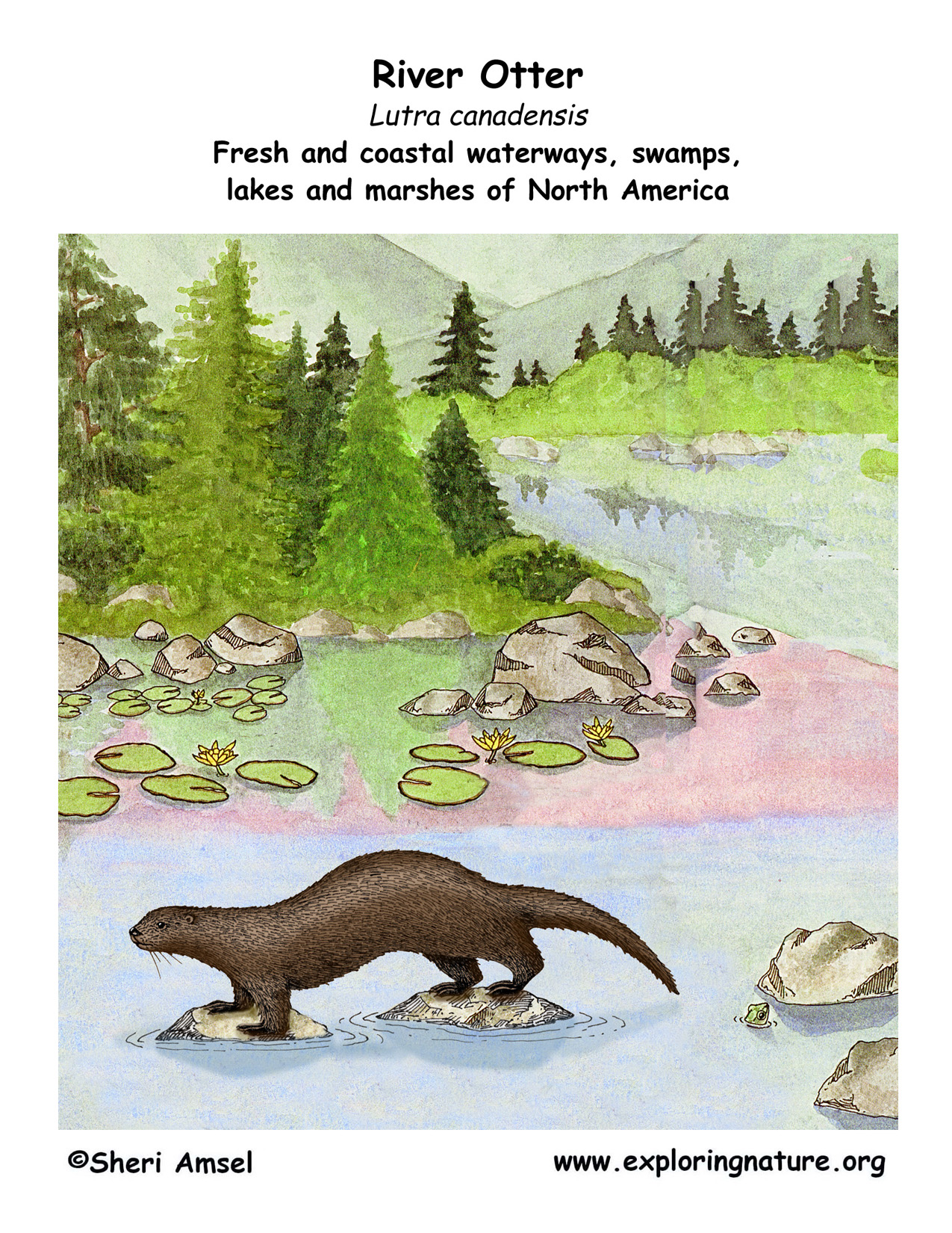 hight resolution of download hi res in habitat poster