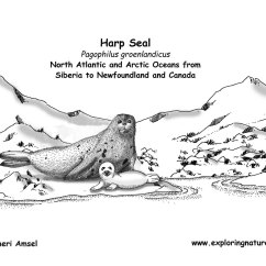 Harp Seal Life Cycle Diagram One Way Lighting Circuit Baby Wiring All Data Save The Seals