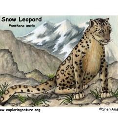 Snow Leopard Anatomy Diagram Siemens G120 Control Wiring Download Hi Res Color