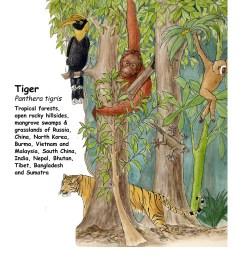 download hi res color diagram tiger [ 1275 x 1650 Pixel ]