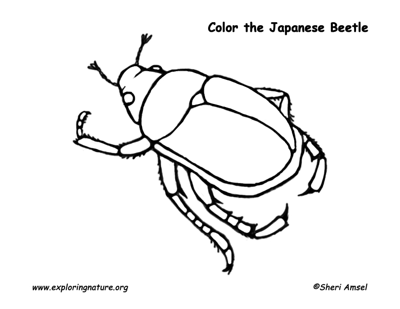 Japanese Beetle Coloring Page