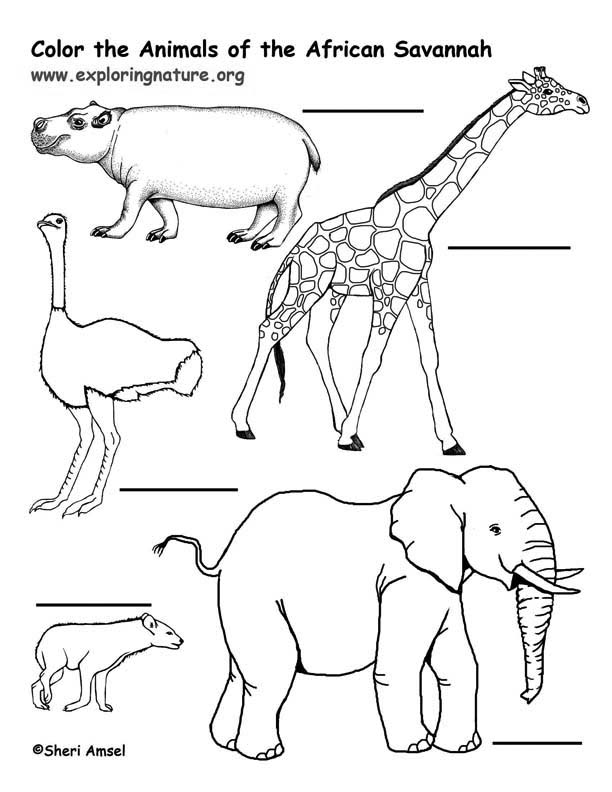 African Savanna Animals Labeling Page