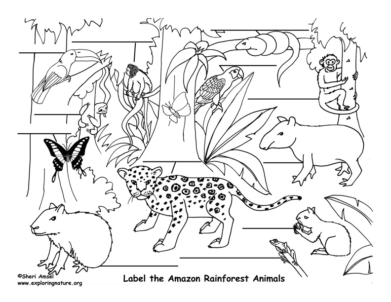Amazon Rainforest Animals Labeling