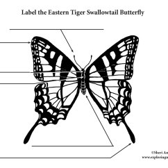 Parts Of A Butterfly Diagram Centurion Keypad Wiring Eastern Tiger Swallowtail Labeling Page