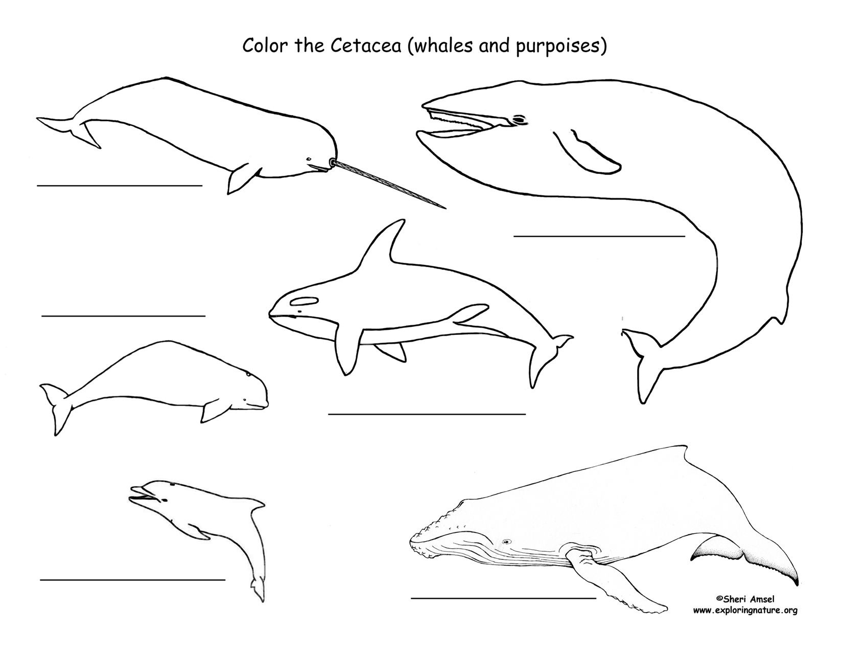 Whales and Dolphins Labeling Page