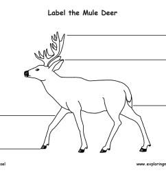 mule body diagram wiring diagrams show mule body diagram [ 1650 x 1275 Pixel ]
