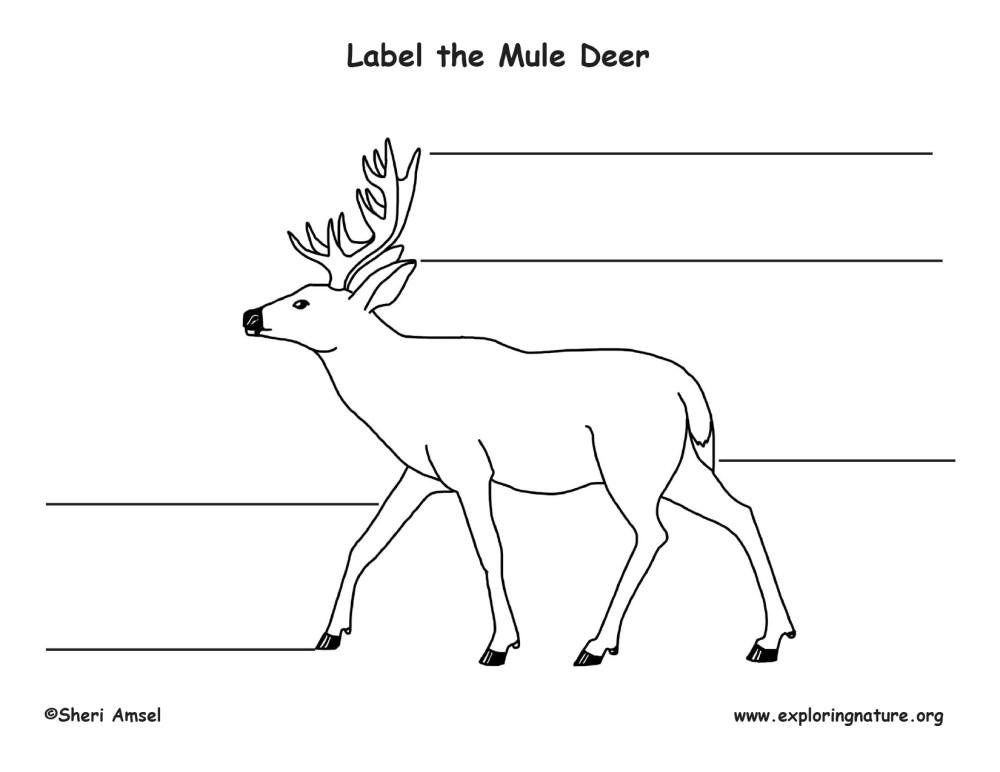 medium resolution of mule body diagram wiring diagrams show mule body diagram