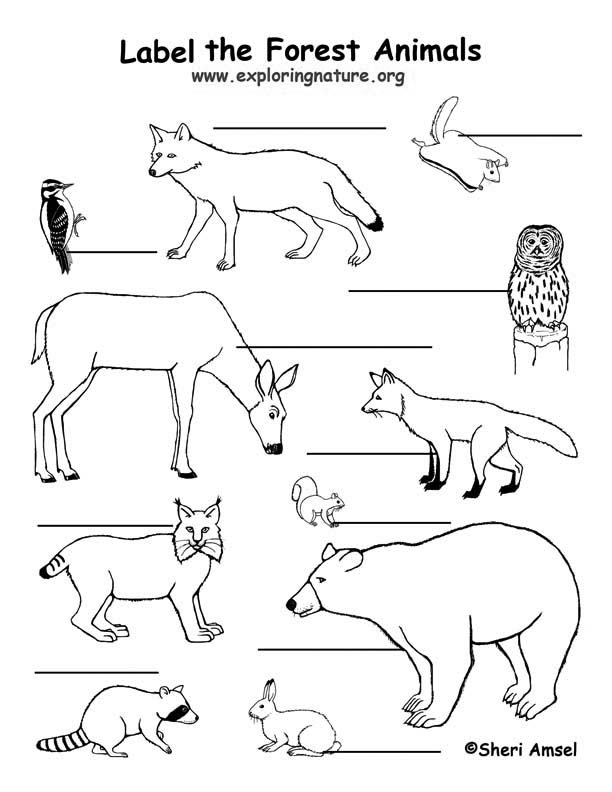 Forest Animals Labeling Page