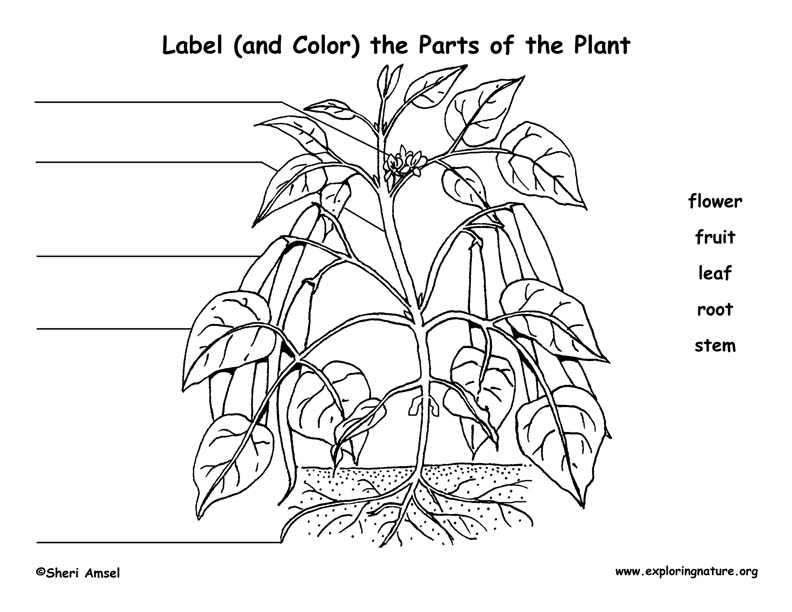 Label the Parts of the Plant (Elementary)