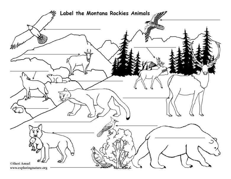 Rocky Mountains Animals Labeling
