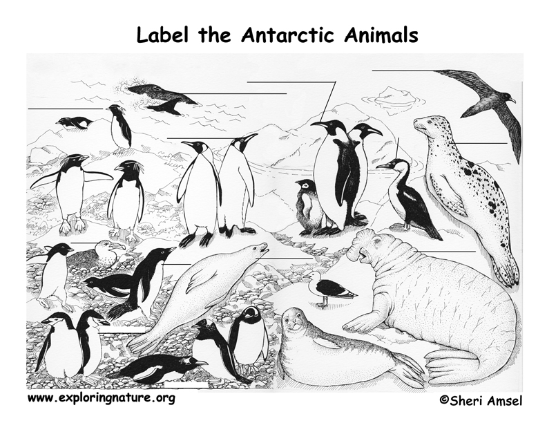 Antarctica Labeling Page