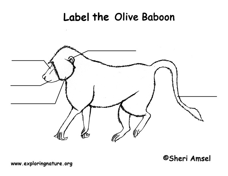 Baboon Labeling Page