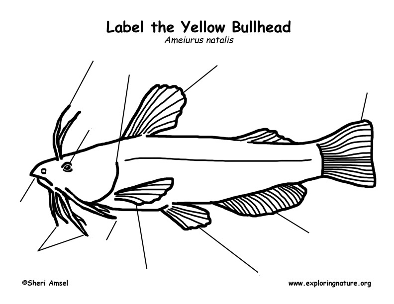 Bullhead Labeling Page