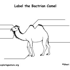 Use Animal Research Diagram Fleetwood Rv Wiring Diagrams Camel (bactrian) Labeling Page