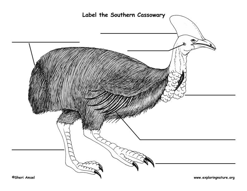 Cassowary Labeling Page