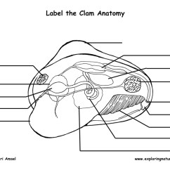 Human Skull Bones Diagram Labeled Vrcd400 Sdu Wiring Clam Anatomy Labeling Page
