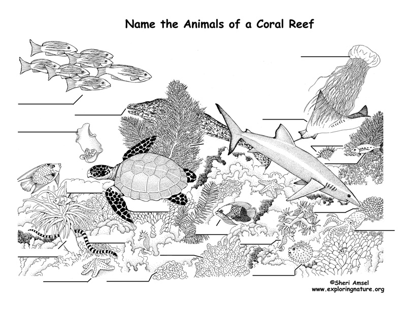 Coral Reef Animals Labeling Page
