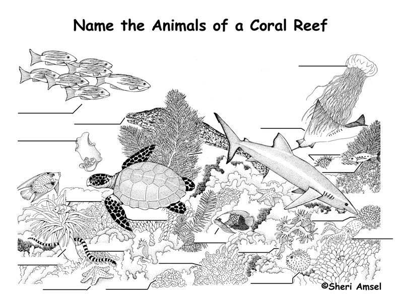 Coral Reef Labeling Page