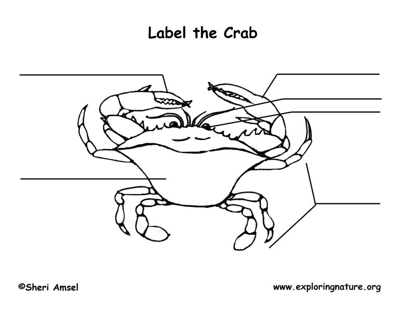Crab (Blue) Labeling Page
