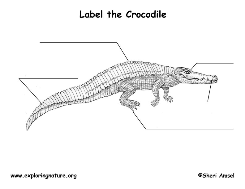 use animal research diagram dual marine radio wiring crocodile labeling page