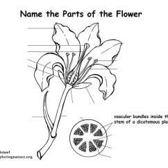 Parts Of A Flower Diagram Dometic Fridge Wiring Labeling Page