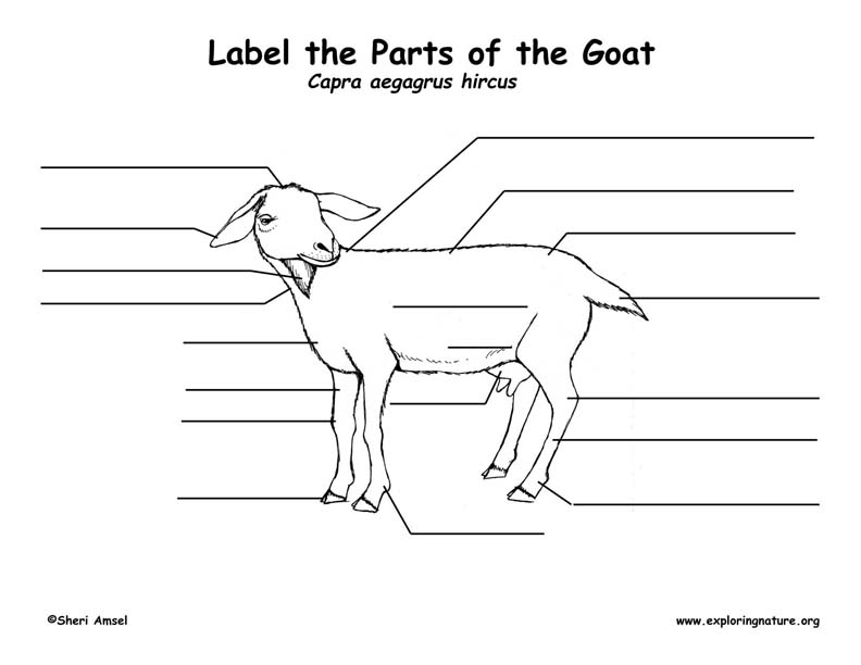 Goat Labeling Page