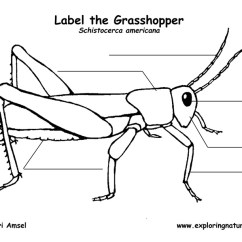 Grasshopper Insect Diagram Wiring For 3 Gang 2 Way Light Switch Labeling Page