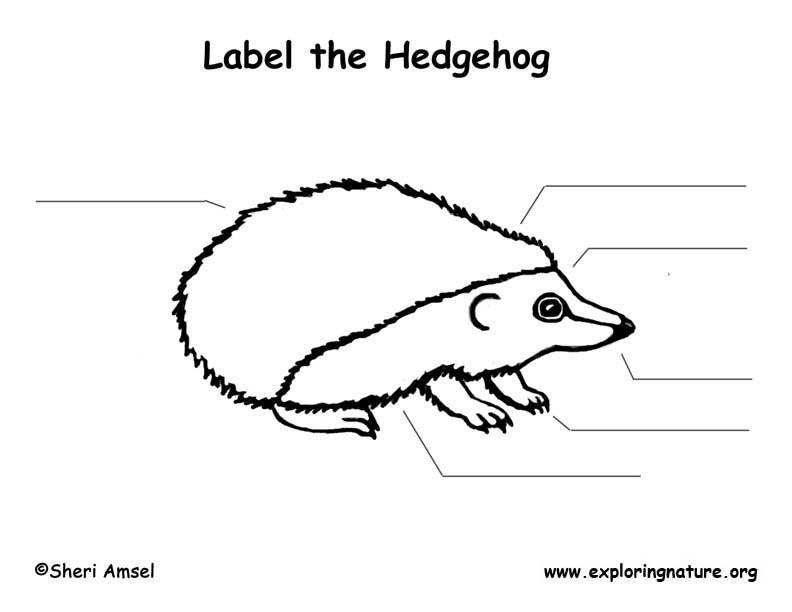 Hedgehog Labeling Page