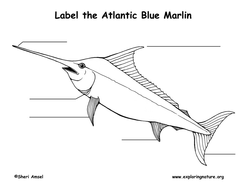 Marlin (Atlantic Blue) Labeling Page