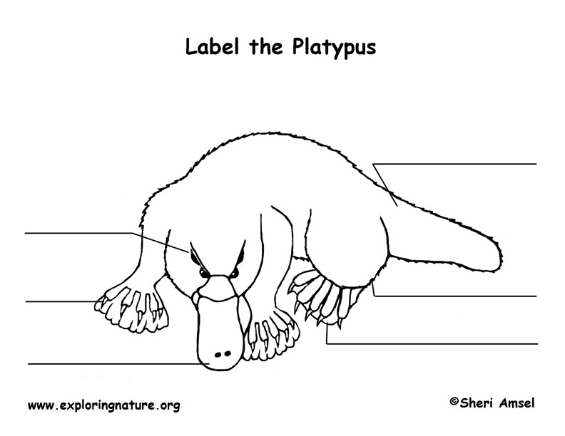 Platypus Labeling Page