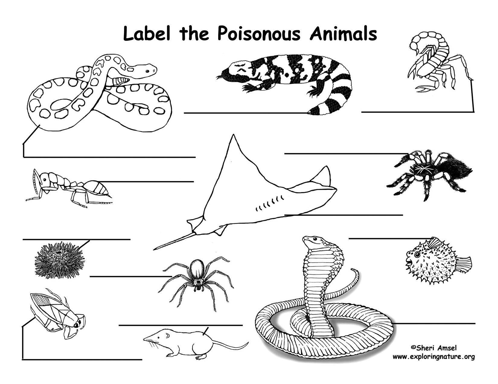 Venomous and Poisonous Animals Labeling Page