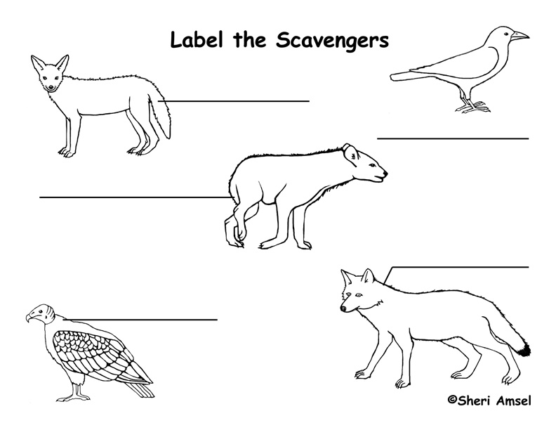 Scavenger Labeling Page