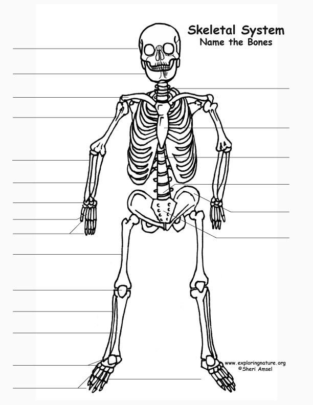 Skeleton Labeling Page