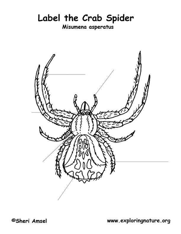 Spider (Crab) Labeling Page